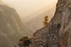Sunbeams, Tree, Grand Canyon of the Tuolumne