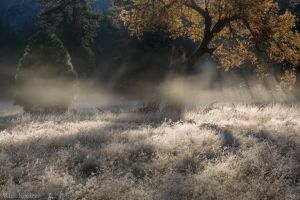 Mist and Black Oak, Ahwahnee Meadow