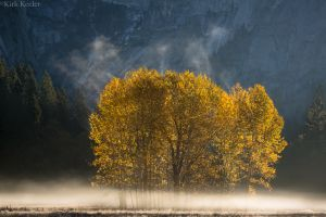 Cottonwoods and Mist, Ahwahnee Meadow