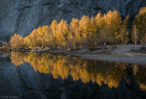 Cottonwoods, Merced River